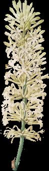 planta-tres-animar2