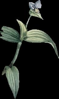 planta-uno