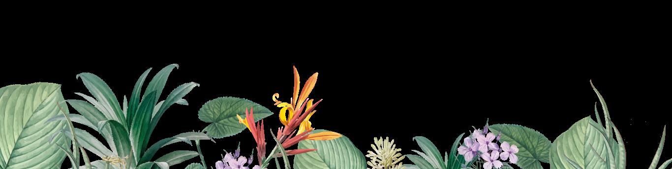 plantas-abajo2